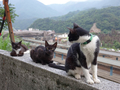 Cats of Houtong, #9031