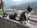 Cats of Houtong, #9032