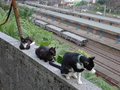 Cats of Houtong, #9034