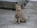 Cats of Houtong, #9036