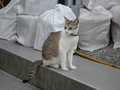 Cats of Houtong, #9041