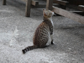 Cats of Houtong, #9053