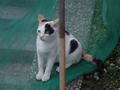 Cats of Houtong, #9069