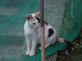 Cats of Houtong, #9070