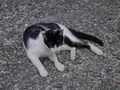Cats of Houtong, #9071