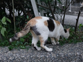 Cats of Houtong, #9072