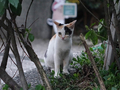 Cats of Houtong, #9073