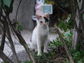 Cats of Houtong, #9074