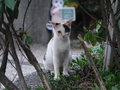 Cats of Houtong, #9075