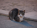 Cats of Houtong, #9082