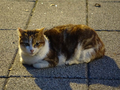 Cats of Houtong, #9084