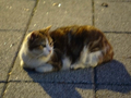 Cats of Houtong, #9085