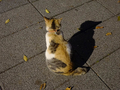 Cats of Houtong, #9089
