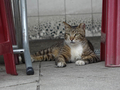 Cats of Houtong, #9124