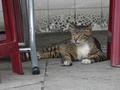 Cats of Houtong, #9125
