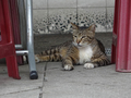 Cats of Houtong, #9126