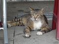 Cats of Houtong, #9127