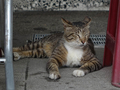 Cats of Houtong, #9128