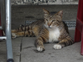 Cats of Houtong, #9129