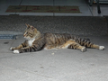Cats of Houtong, #9134