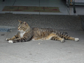 Cats of Houtong, #9135