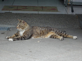 Cats of Houtong, #9136