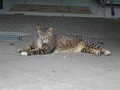 Cats of Houtong, #9137