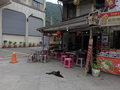 Cats of Houtong, #9142