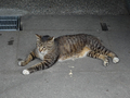Cats of Houtong, #9144