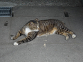 Cats of Houtong, #9145