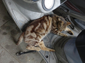 Cats of Houtong, #9148