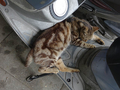 Cats of Houtong, #9149