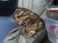 Cats of Houtong, #9150