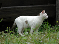 Cats of Houtong, #9152