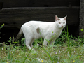 Cats of Houtong, #9153