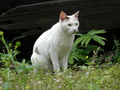 Cats of Houtong, #9155