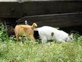 Cats of Houtong, #9156