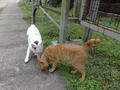 Cats of Houtong, #9157