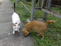 Cats of Houtong, #9158