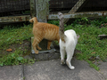 Cats of Houtong, #9159
