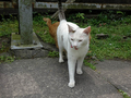 Cats of Houtong, #9160