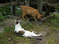 Cats of Houtong, #9163