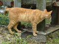 Cats of Houtong, #9164
