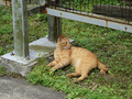 Cats of Houtong, #9166