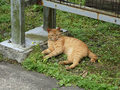 Cats of Houtong, #9167