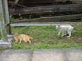Cats of Houtong, #9168