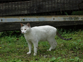 Cats of Houtong, #9169