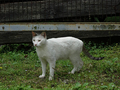 Cats of Houtong, #9170
