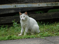 Cats of Houtong, #9171