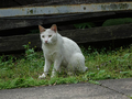 Cats of Houtong, #9172